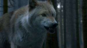 game-of-thrones-dire-wolves